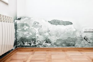 emergency mold cleanup